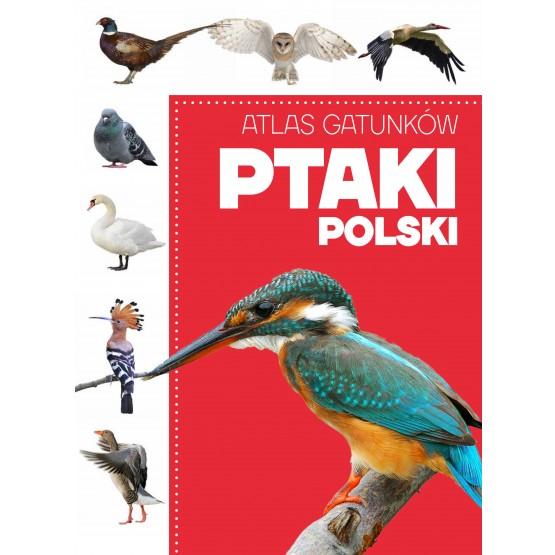 Książka Atlas gatunków. Ptaki Polski praca zbiorowa
