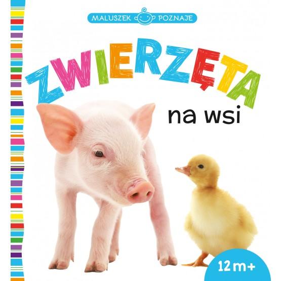 Książka Maluszek poznaje. Zwierzęta na wsi praca zbiorowa