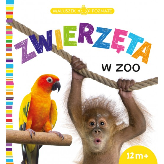 Książka Maluszek poznaje. Zwierzęta w zoo praca zbiorowa