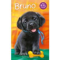 Kto mnie przytuli? Bruno tęskni za domem